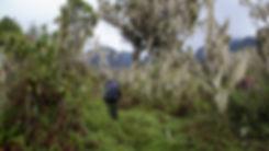 Bukurungu Trail