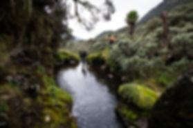 Bukrungu Trail