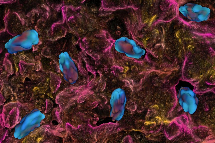 Bacterias_Wallpaper_2.png
