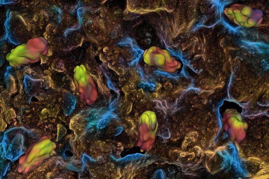 Bacterias_Wallpaper_4.png
