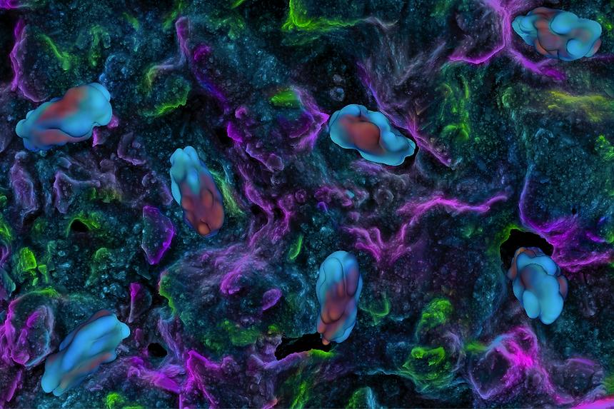 Bacterias_Wallpaper_1.png