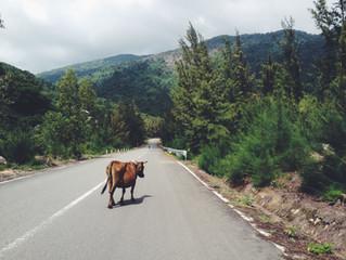 Slay a Sacred Cow