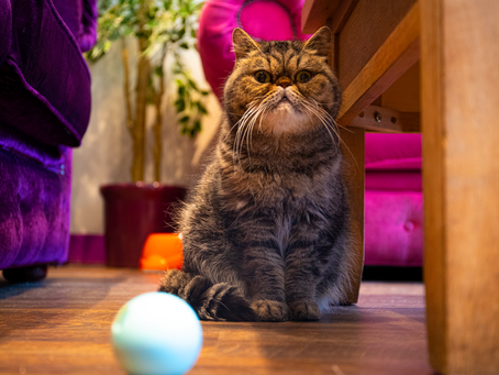 The Benefits Of Treat Dispensing Toys For Your Pets