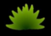 Agav Jabali (agave convallis trel)