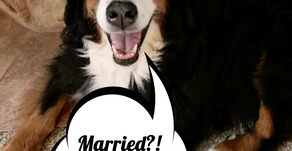 Pet-Nups: PreNups for Your Pets