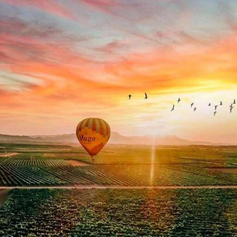 Rioja. Hot Air Ballon Ride Muga Winery Spain Wine Region