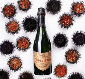 Lady Wines_Spain Travel Journal.jpg