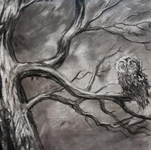 owl study.png
