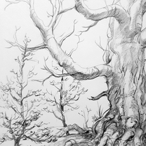 Tree study.png
