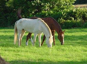 centre équestre poney-club pensions essonne