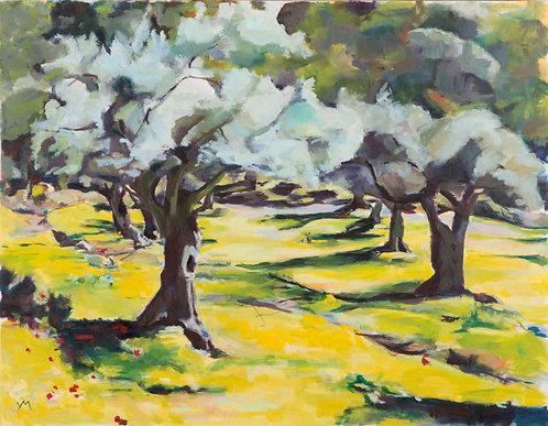 Oilve grove