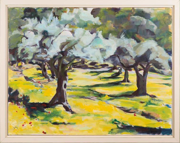 Olive grove, 2013