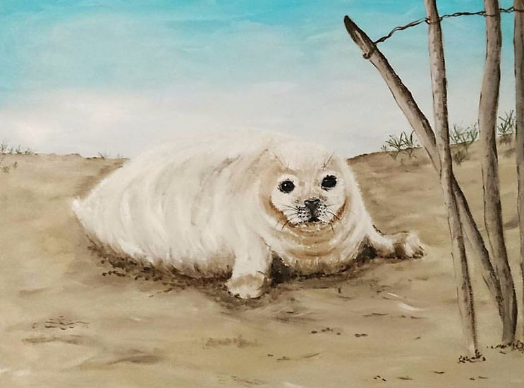 Norfolk Seal Pup