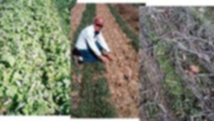 cover crop2.jpg