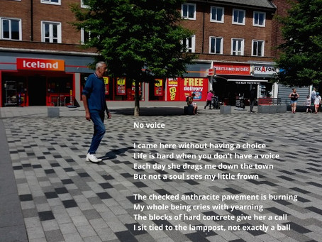 Windows & Memes for National Poetry Day
