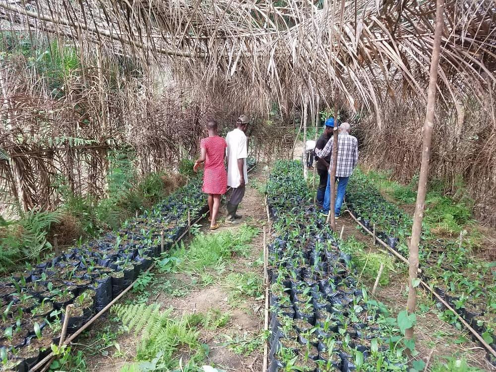 Pequeñas plantas que luego se volverán a plantar en grandes extensiones