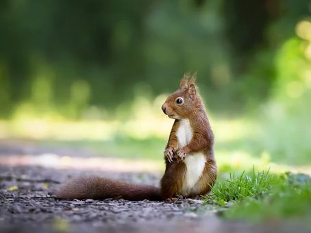 SquirrelsOne: What's on Your Campus