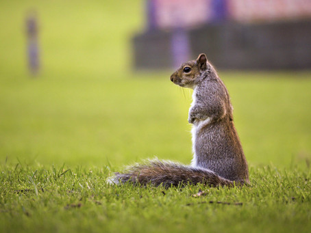 Welcome to the Squirrel-Net Blog!