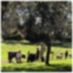 farm1(small).jpg
