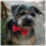 Doggy 1(small).jpg