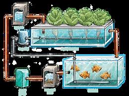 Hydroponics / Aquaponics