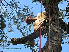 Four Seasons Arbor Care Arborist