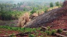 Ecological sustainability-green Cambodia