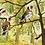 Thumbnail: Goldfinch & Catkins Ltd Edition Archive Print