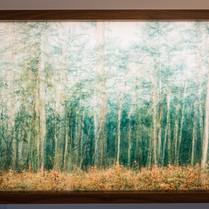 Florian W. Mueller, Lichtung Wald