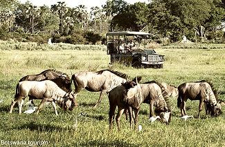Safari photo en Afrique.jpg