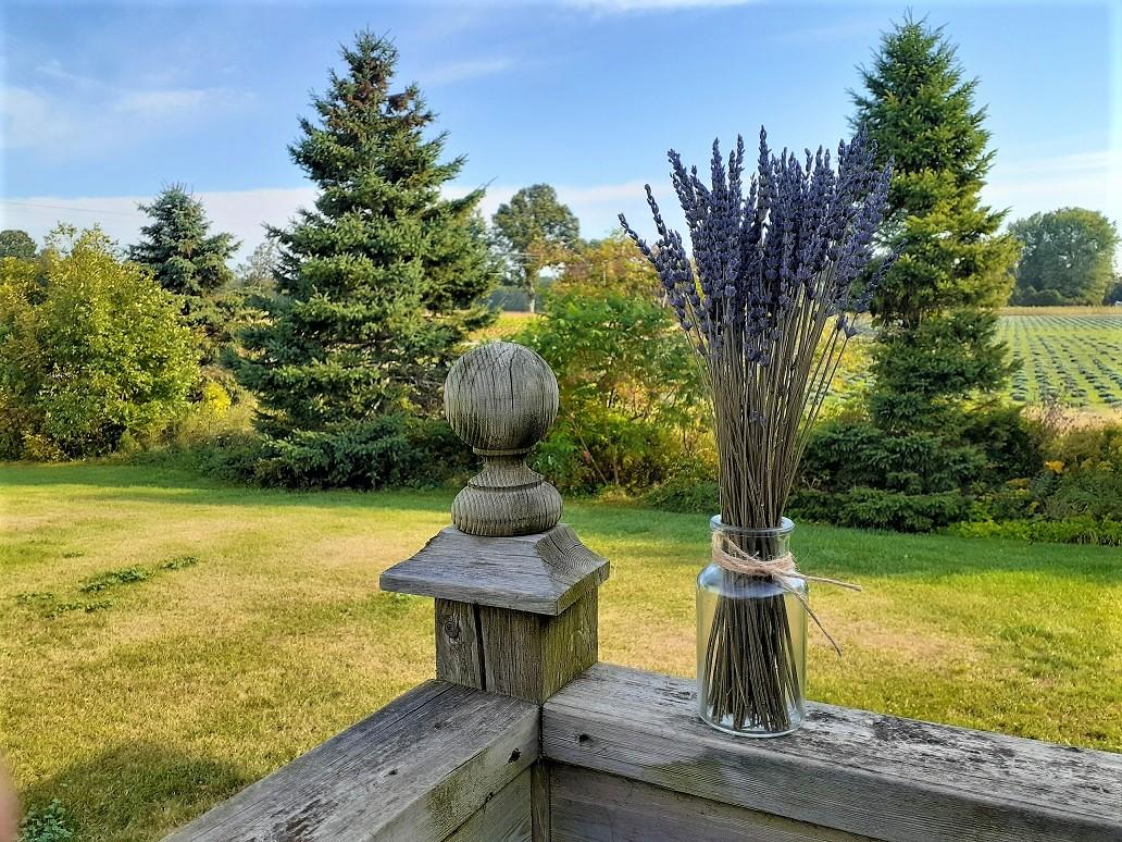 """10""""-14"""" Dried Lavender Bouquet"""