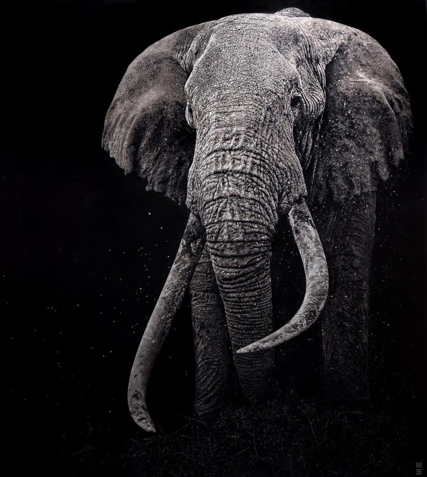Mark Evans elephant wall art interior