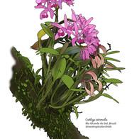 Estampa Orquídea
