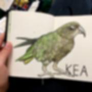 NZ_birds2.png