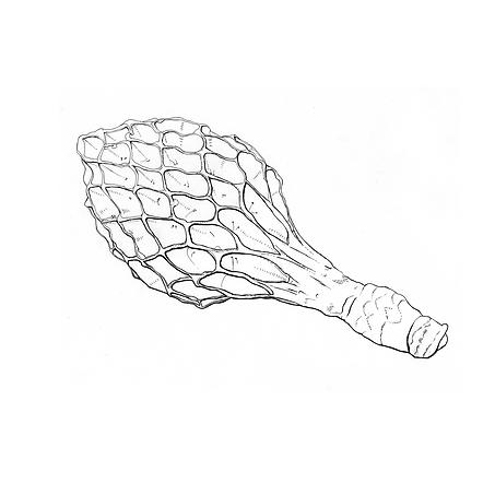 wissenschaftliche Zeichnung 2.png