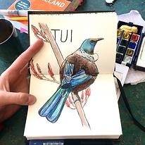 NZ_birds1.png