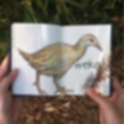 NZ_birds3.png