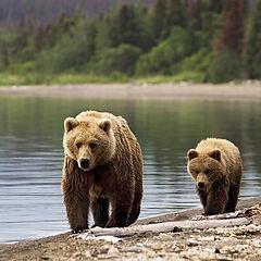 Bear Watching Transylvania