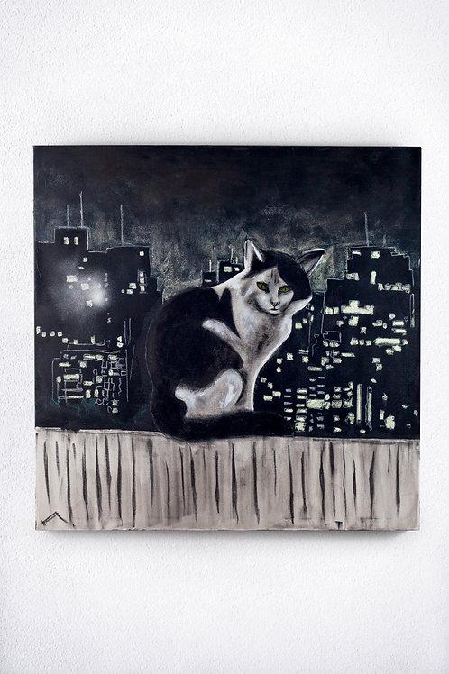 Gato da noite paulista