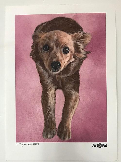 Dog Mary