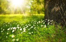 טיול אביב