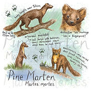 Pine marten square greeting card.jpg
