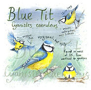 blue tit square.jpg
