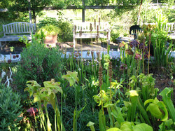 The Bog at Warren Grove
