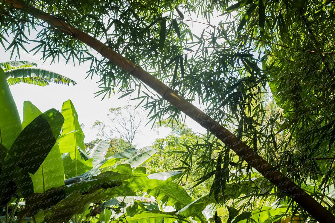 jungle feeling