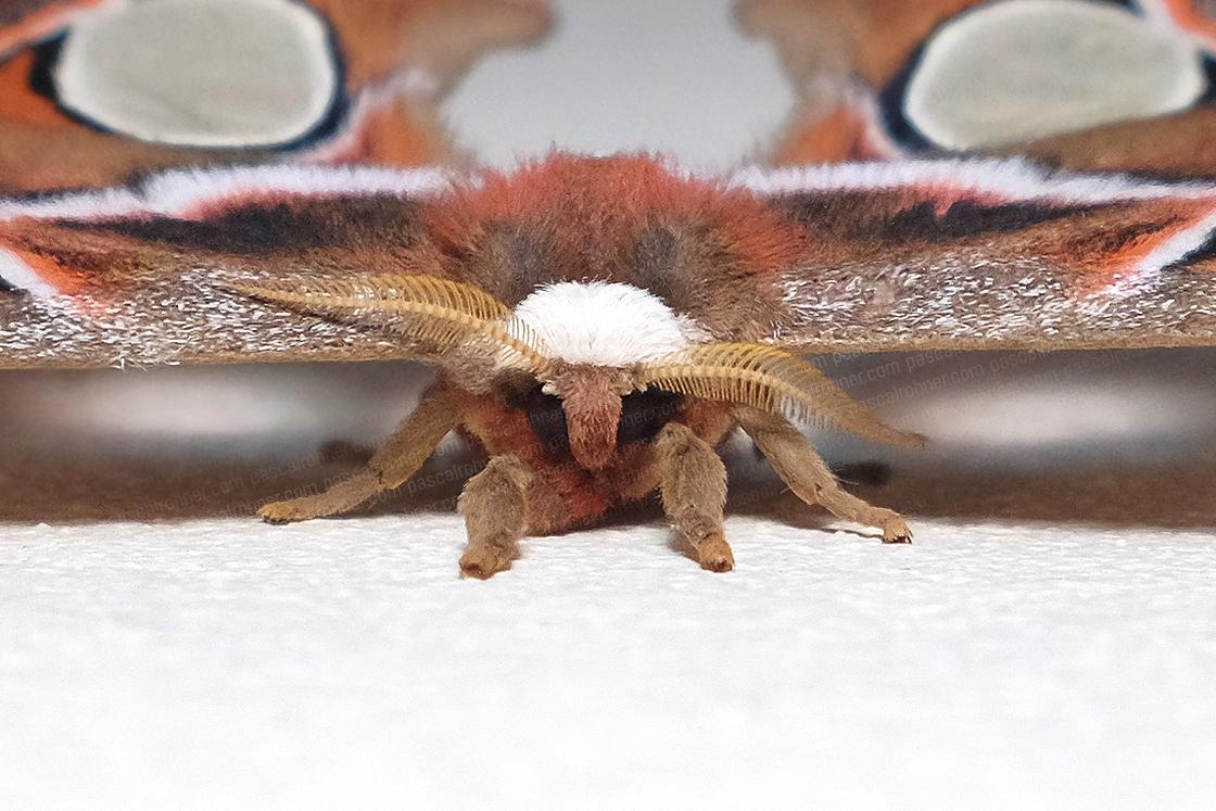 moth-a portrait