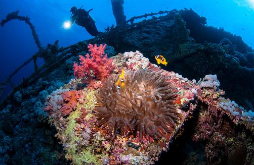 Red-Sea-Wreck-Dive_Explorer-Ventures.jpg