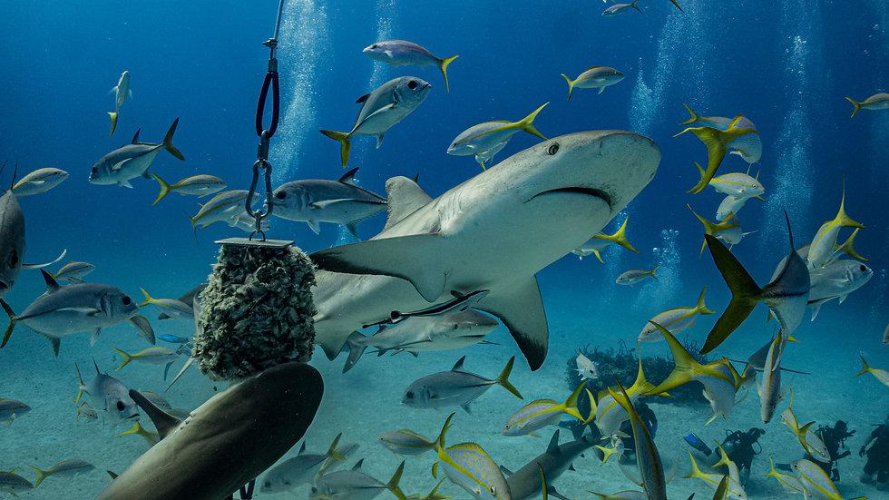 Bahamas Diver Deposit Oct 1-8 (1 Diver)