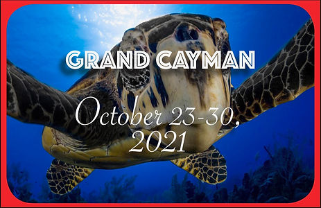 Cayman Postcard.jpeg