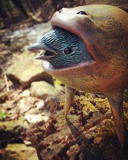 birdeater outdoors 2 72px.jpg